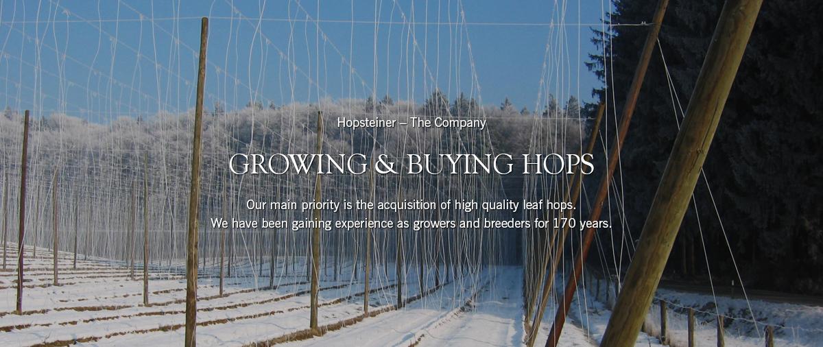 Buy Hops online   Hopsteiner