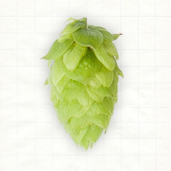 Hallertau Northern Brewer