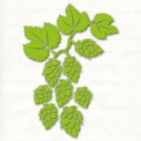 Slowenischer Steirer Golding Celeia